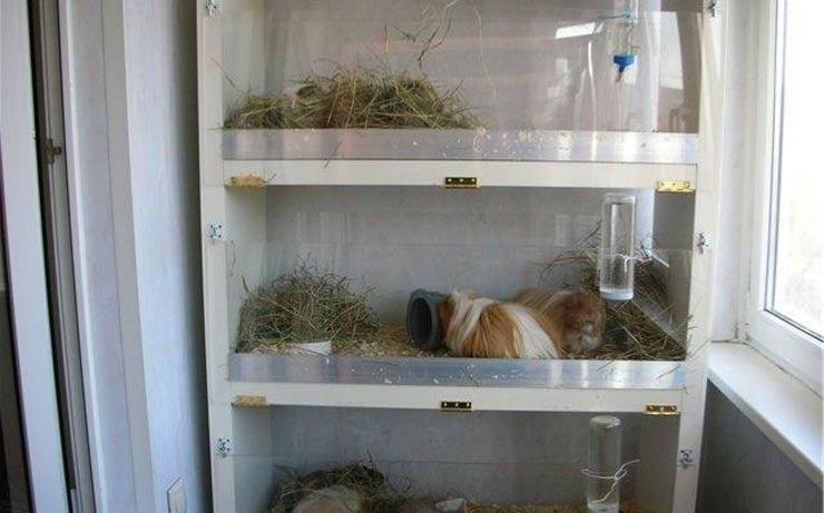 стеллаж для животных