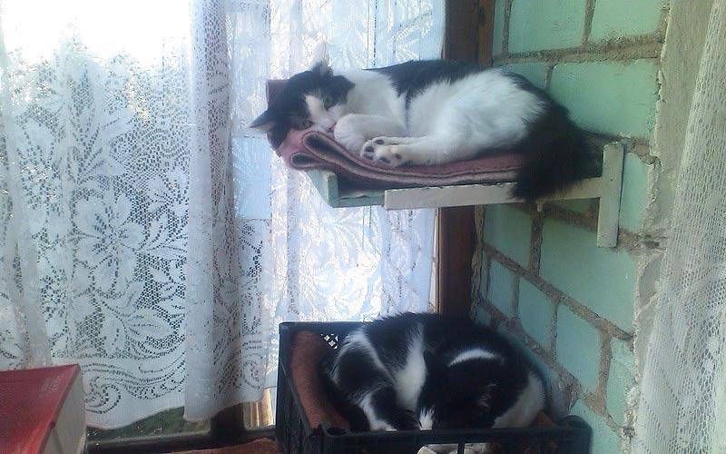 полочки для котов