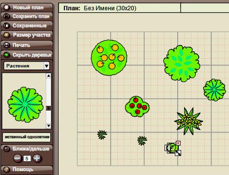 расположение растений