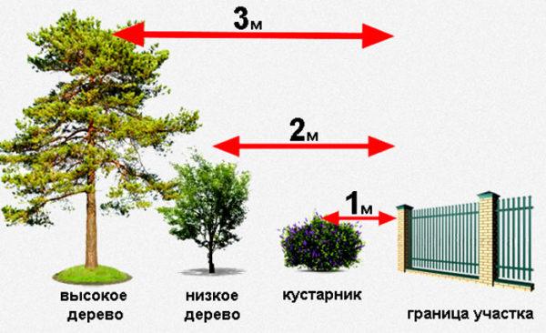нормы посадки деревьев