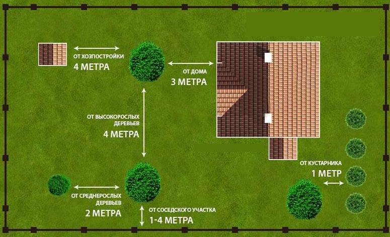 дистанция посадки деревьев